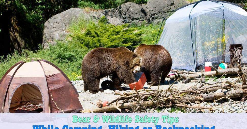 Bear_Safety_Tips